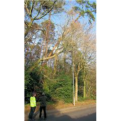 images_Gallery2012_Tree Surgery_treesurgery1_240_240_True