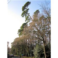 images_Gallery2012_Tree Surgery_treesurgery2_240_240_True