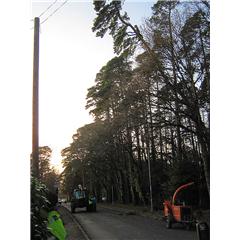 images_Gallery2012_Tree Surgery_treesurgery4_240_240_True