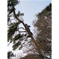 images_Gallery2012_Tree Surgery_treesurgery5_240_240_True