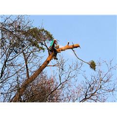 images_Gallery2012_Tree Surgery_treesurgery8_240_240_True