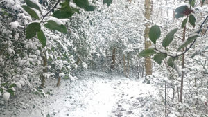 Photograph of Colehill Triangle in the snow